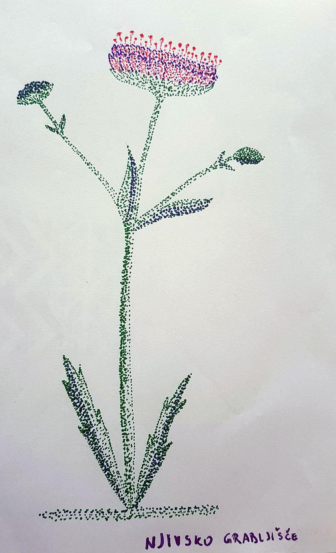 matija-lipovc5be-plevel-m